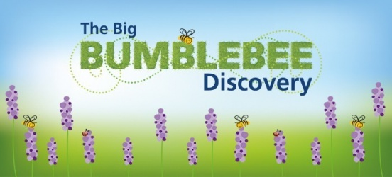 The Big Bumblebee Discovery